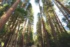 chelsea-bock-3073 Bäumen